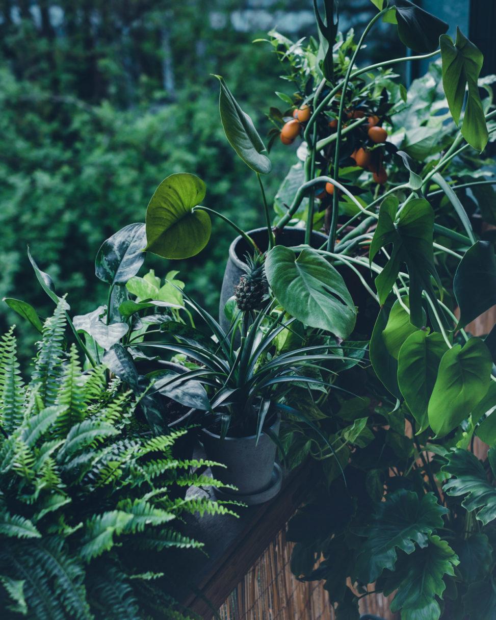 BalkonBar Jungle urban balcony bar plants planten monstera