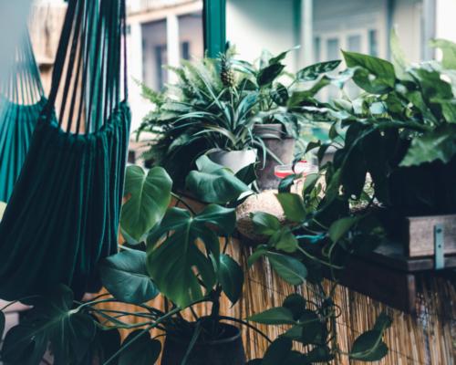 BalkonBar Urban Jungle plants by Roos Oosterbroek